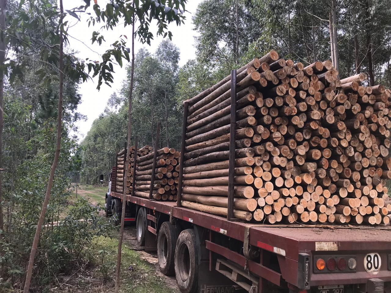 """""""Más inversión y mayor producción forestal"""""""