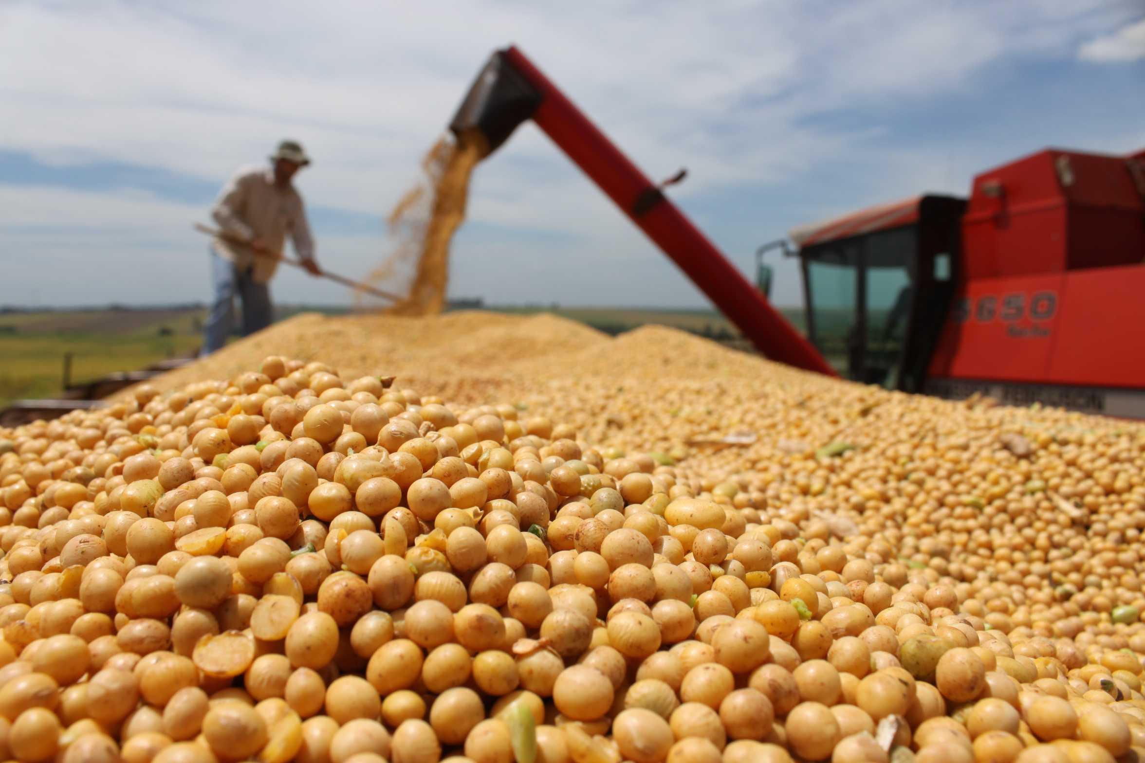 Eliminación de la tasa de importación para la soja