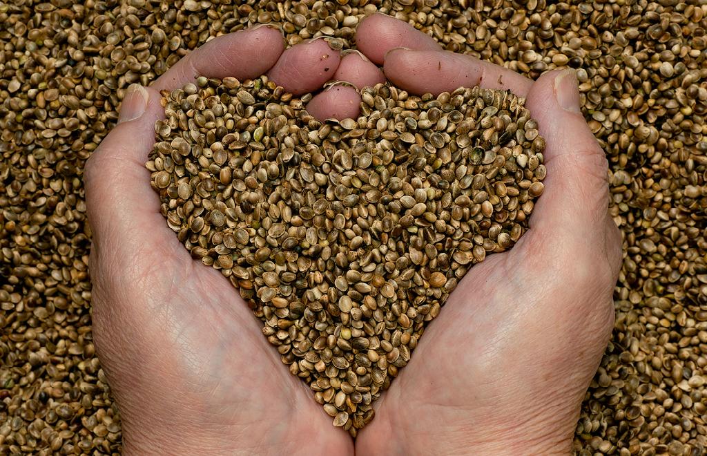 """""""Si queremos una buena semilla necesitamos una buena ley"""""""