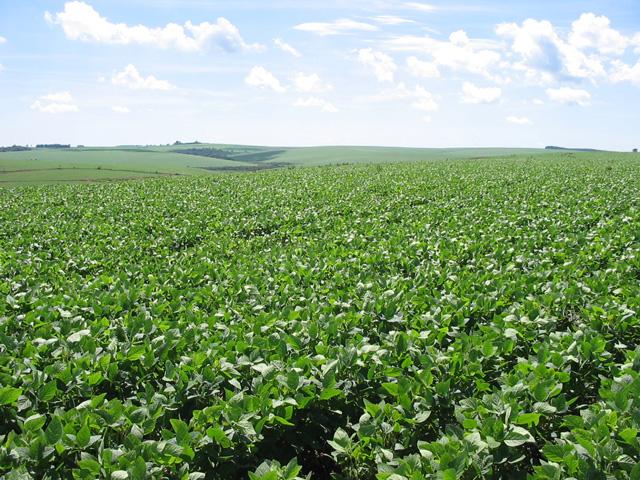 En Córdoba, los márgenes de soja crecieron un 26% durante la última campaña
