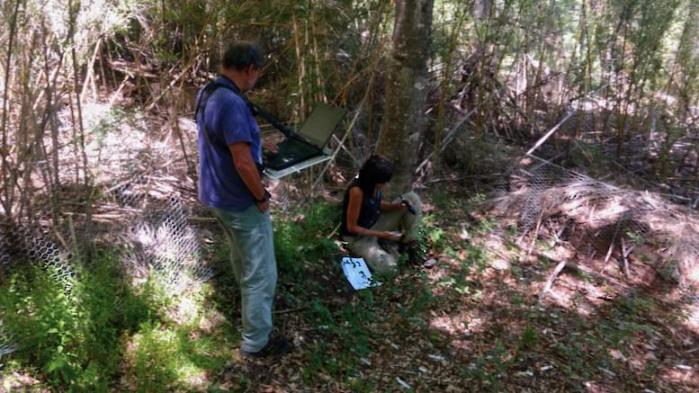 """""""El calentamiento global podría impactar en los bosques de la Patagonia"""""""