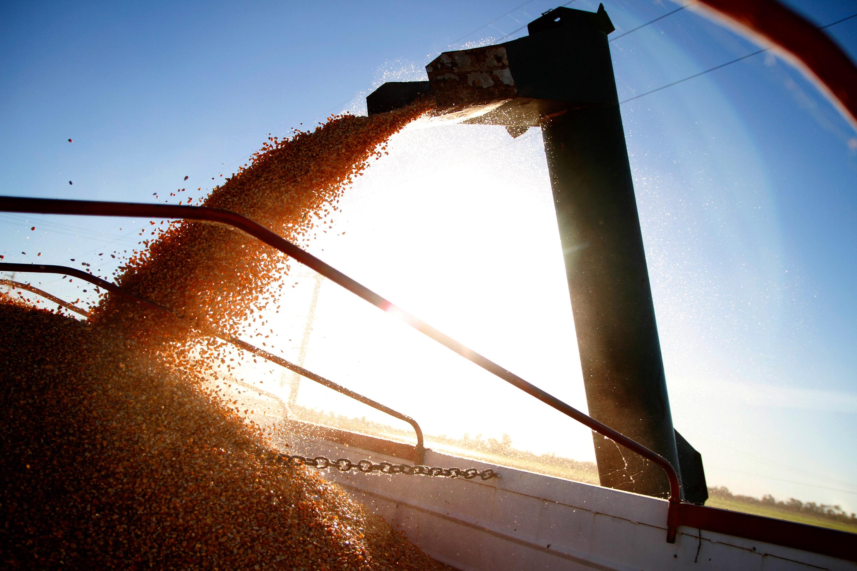 """""""Una buena demanda del trigo en los mercados"""""""
