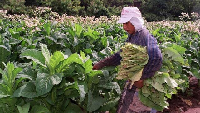 """Misiones: """"Problemas con el sector tabacalero"""""""