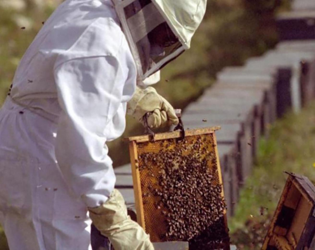 La cantidad y calidad de la miel depende de lo que hagamos hoy