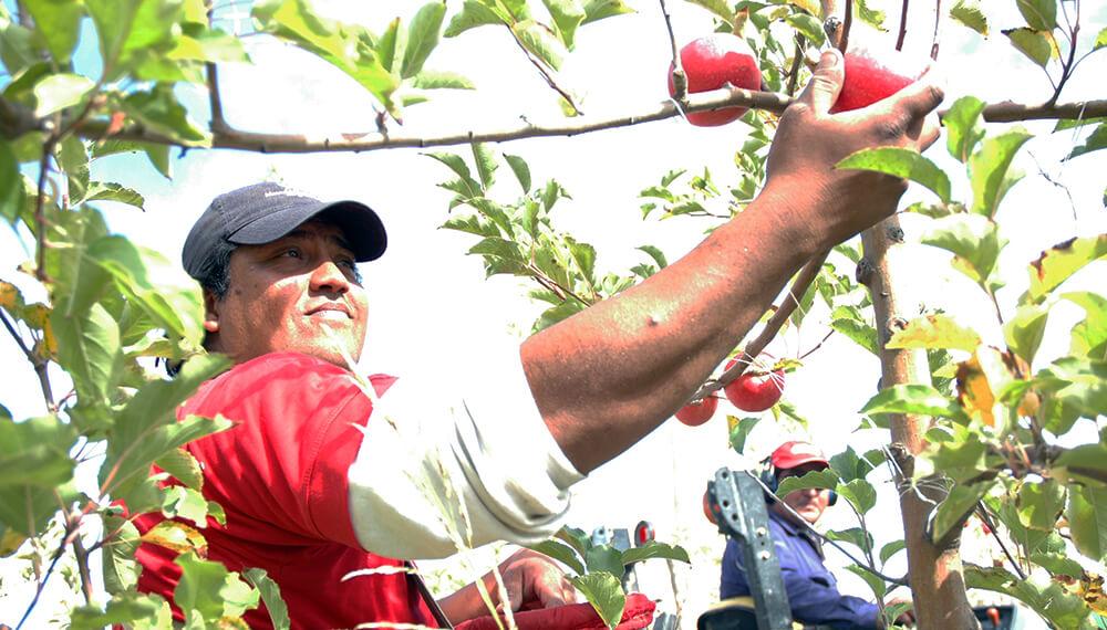Pagan prestación por desempleo a trabajadores rurales