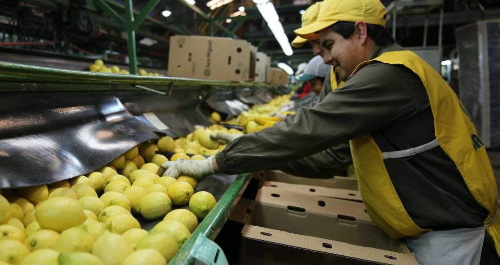 Se define la continuidad de exportaciones de limones a la Unión Europea