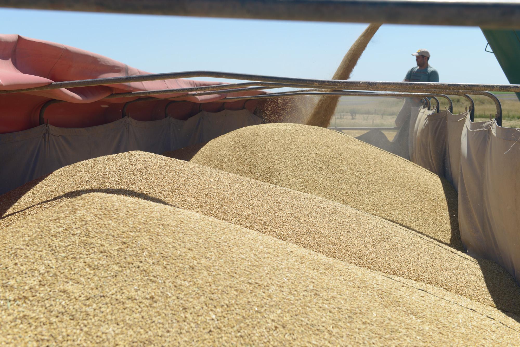Agroexportación: se liquidaron divisas por US$ 1.734 millones en noviembre