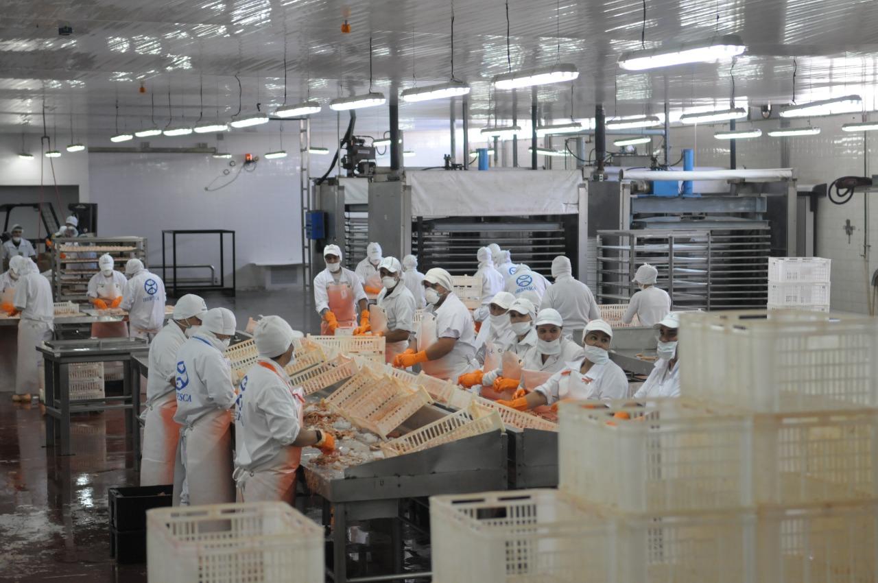 La actividad del sector pesquero y agropecuario apuntaló la mejora de los indicadores de la economía