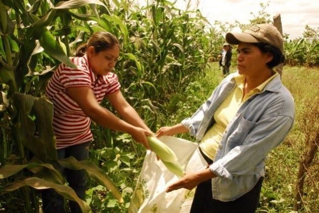 """Misiones: """"Mujeres rurales de abren paso a la comercialización de sus productos"""""""