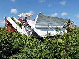 """Misiones: """"se fortalece la mecanización de la cosecha de yerba mate"""""""